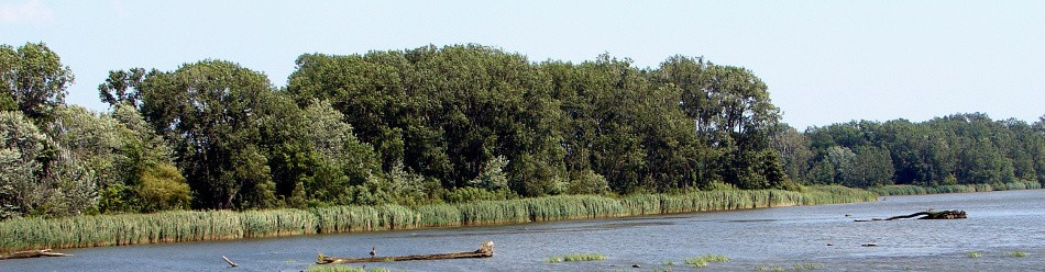 Grosse Ile - Marshes in International Wildlife Refuge